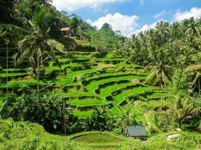 Viaje a INDONESIA (Bali y Komodo) 5
