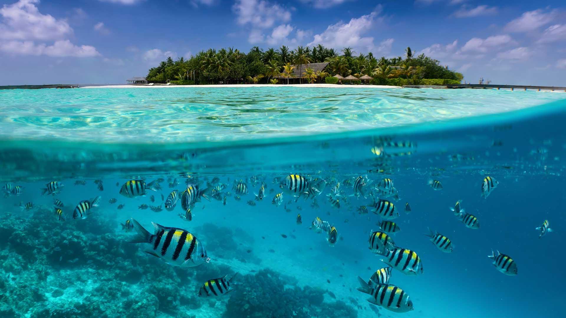 Viaje a Maldivas buceo 0