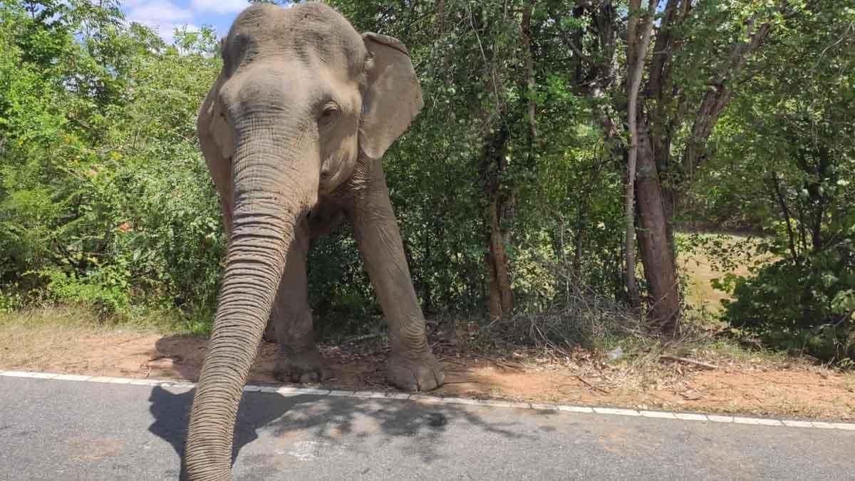 elefante en un viaje a sri lanka