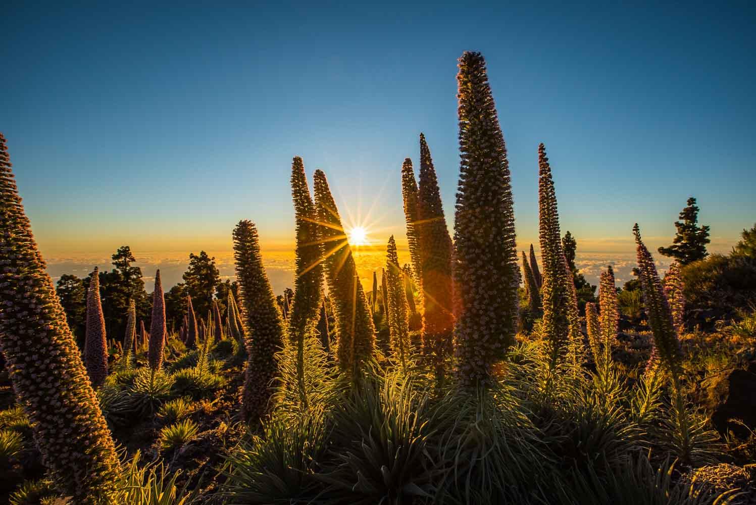 La Palma, guía de viaje por una de las islas más bonitas de Canarias