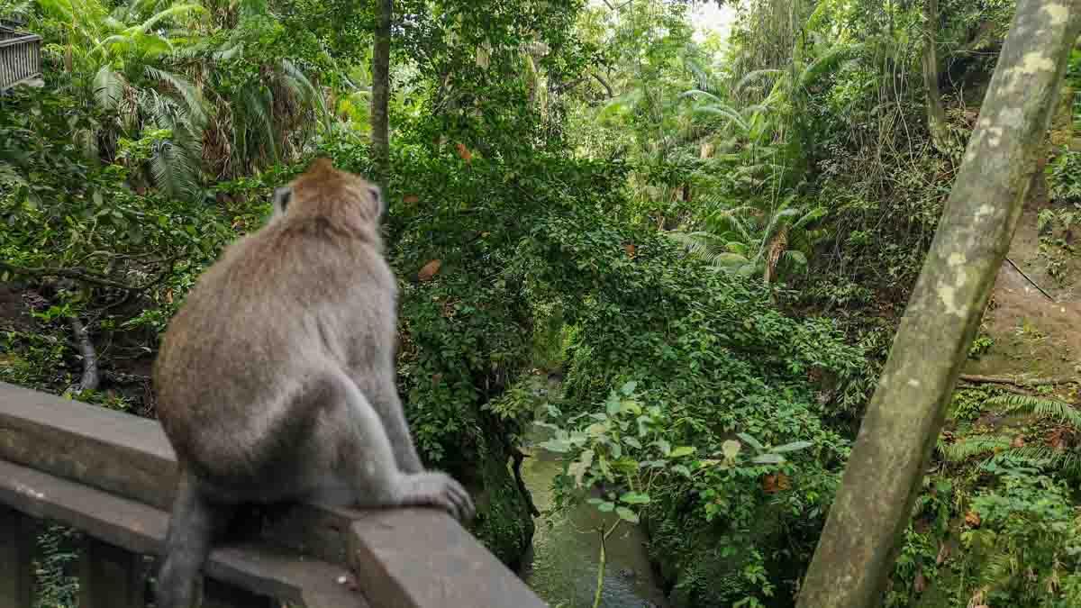 monkey forest en ubud bali