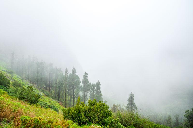 bosque de nubes en la gomera