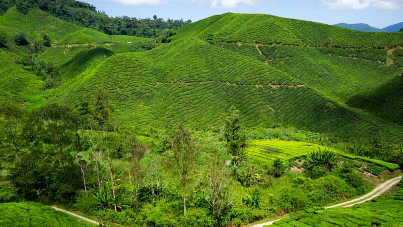 cameron highlands en malasia