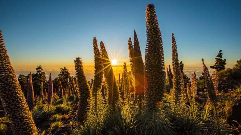 paisajes de españa canarias