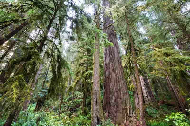 parque nacional sequoias eeuu
