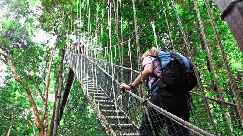 selva malasia