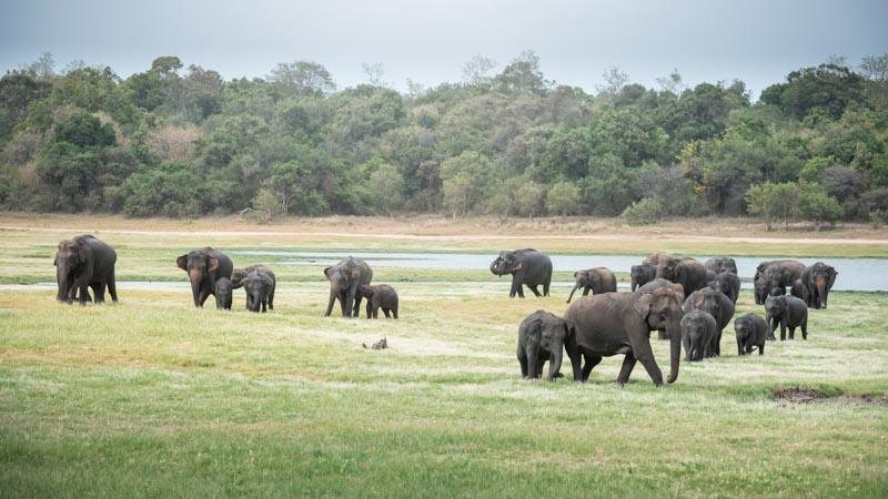 viaje por sri lanka en un parque nacional