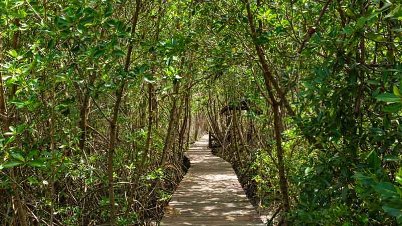 viajes en grupo costa rica manglar