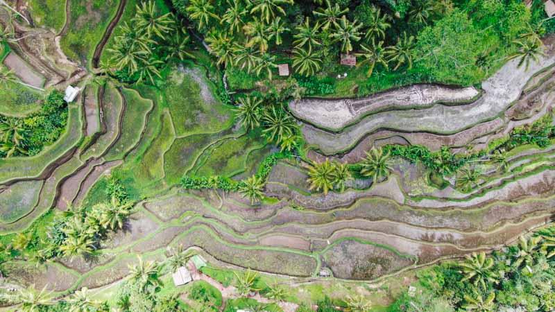 arrozales viaje a indonesia